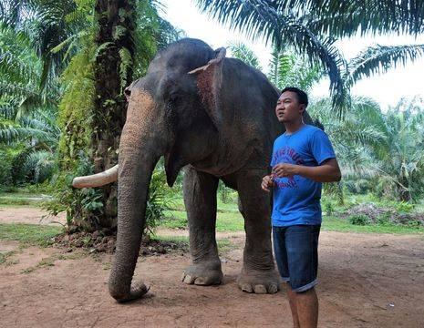 Thailand-Khao-Sok-Olifantenexcursie