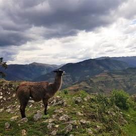 Kuelap Noord-Peru