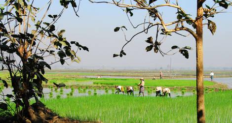Locals werken op het rijstveld in Pyay