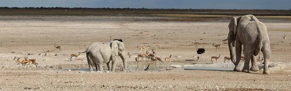 Olifanten op de vlaktes van Etosha in Namibië