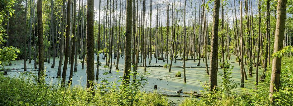 Amerika-Florida-Everglades_3_518884