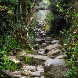 Sabah-MountKinabalu-trail-from-rocks-in-jungle(8)