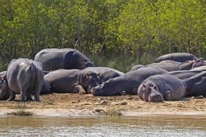 Afrika-nijlpaard-2
