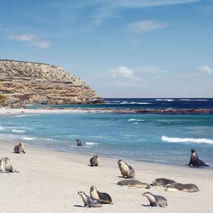 Australie-Kangaroo-Island-Seal-Bay-zeehonden