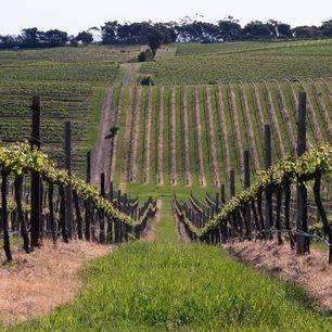 Australie-McLaren-Vale-wijngaarden