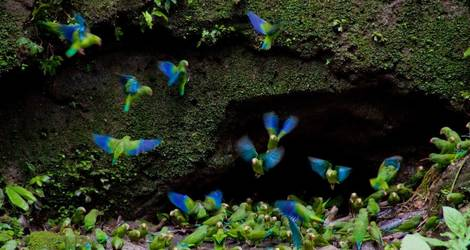 Ecuador-Amazone-colibri