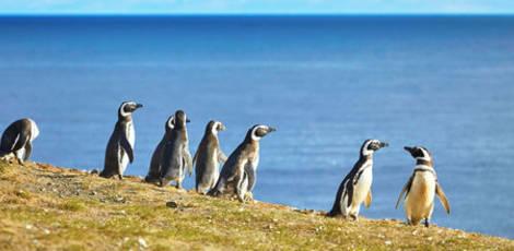 Chili-Magdalena-eiland-pinguin-1_1_426624