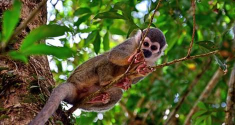 Ecuador-Amazone-Aap