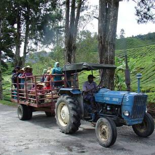 Cameron-Highlands-werkers(8)