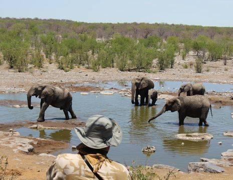 Namibie-Etosha-National-Park-Olifanten_1_532120