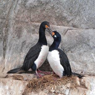 Chili-Puerto-Natales-Skorpios-vogels