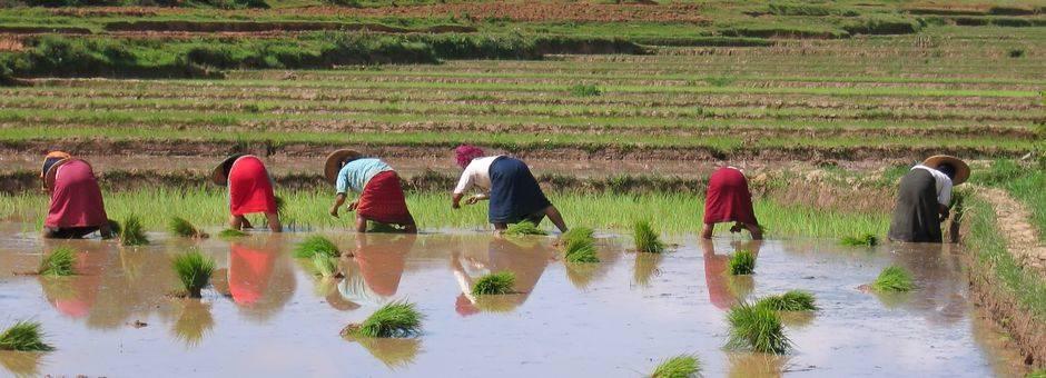 Myanmar-Kalaw-werkersophetland(13)