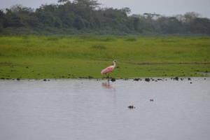 Tour naar de wetlands van Caño Negro