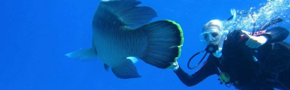 Bucketlist: duiken in het Great Barrier Reef