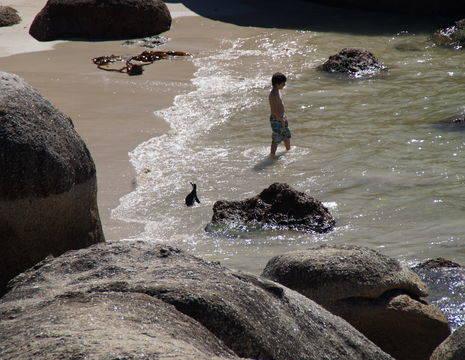 Boulders-Beach-Zwemmen(7)