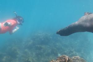 Snorkelen bij Concha Perla