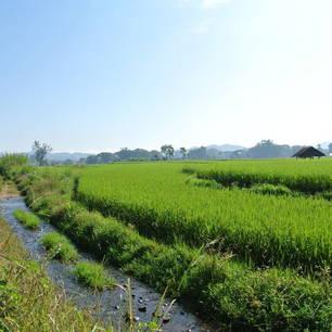 Myanmar-Hsipaw-rijsvelden(8)