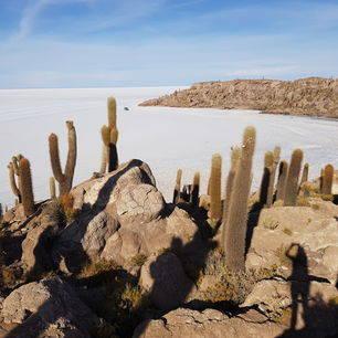 Bolivia-Uyuni-Zoutvlaktes-cactussen_1_356214