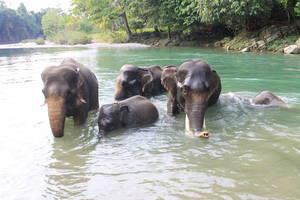Tangkahan: Olifanten wassen