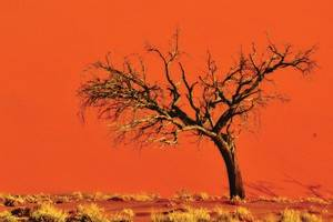 Natuur in Namibië