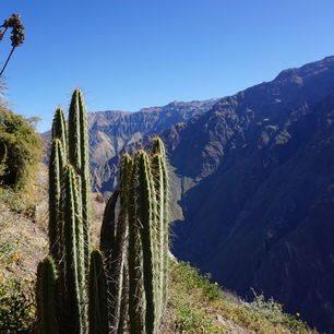 Peru-Chivay-Cactus_1_404112