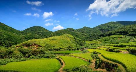 De-groene-natuur-van-Japan