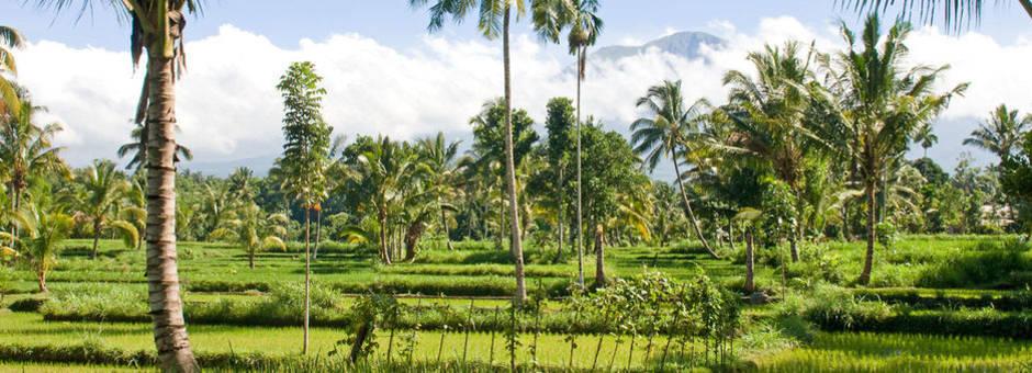 Indonesie-Lombok-Tetebatu-natuur3_1