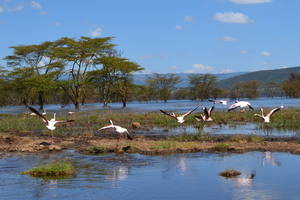 Nationale Parken in Kenia
