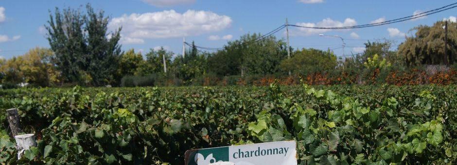 Mendoza-wijngaard1_1_401854