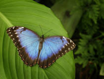 Botanische tuin en vlindertuin