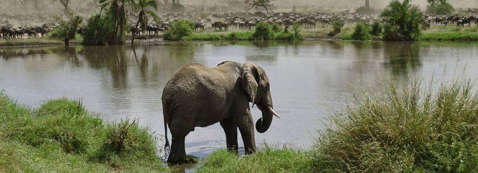 Tanzania-Serengeti-National-Park-2-olifant_1_364764