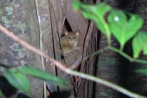 Manado: Dagtocht Tangkoko National Park