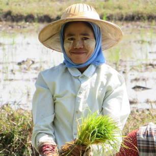 Pyay-rijst-vrouw(8)