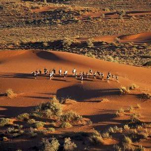 Namibie-Kalahari-woestijn_4_306952