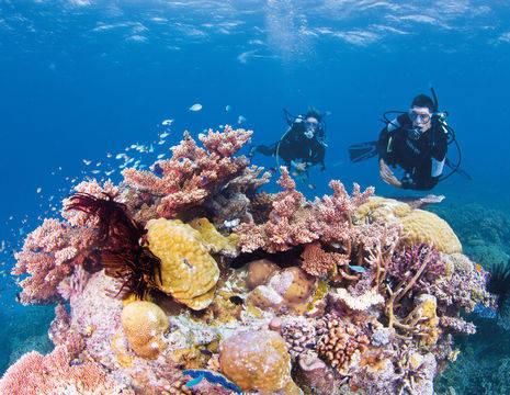 Australie-Great-Barrier-Reef-snorkelen-4_1_557306