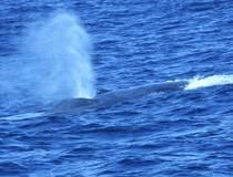 Walvisspotten
