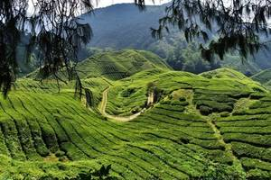 Cameron Highlands, Mountainbiken