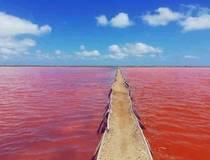De rode zee
