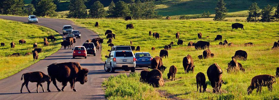 Amerika-Custard-State-Park-Buffalo