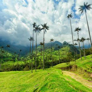 Colombia-Salento-Cocora-Valley_1_480866