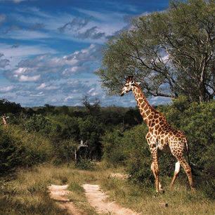 Zuid-Afrika-Safari-84280dc6