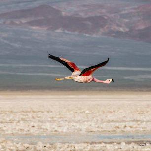 Chili-Salar-de-Atacama-Laguna1_1_430992