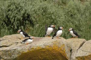 Papegaaiduikers en walvissen spotten