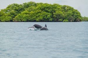 Dolfijnen spotten, snorkelen en Red Frog Beach