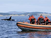 Walvissen spotten per snelle boot