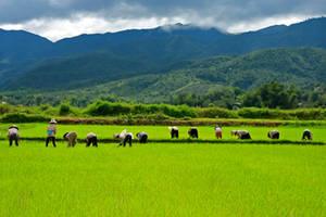 Vietnam-VanVerre5