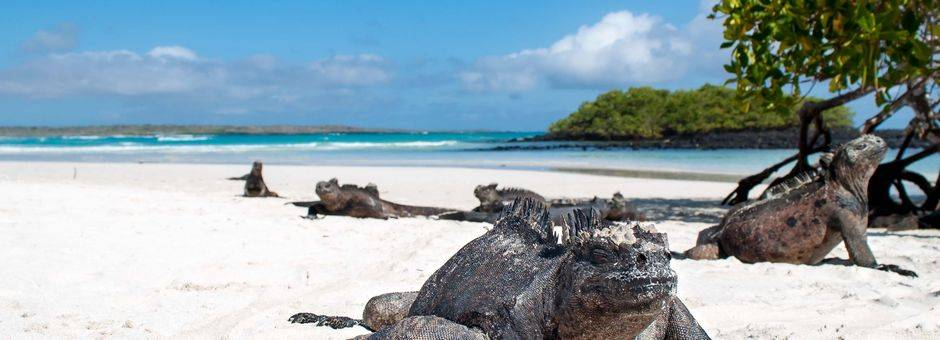 Grote varanen op Santa Cruz, Galapagos