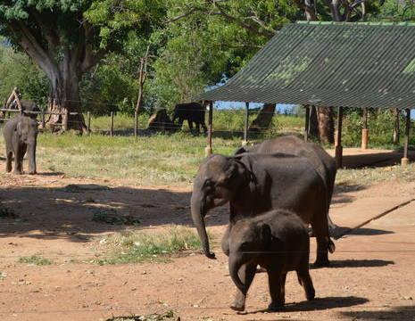 Sri-Lanka-Udalawale-olifantenweeshuis1(8)