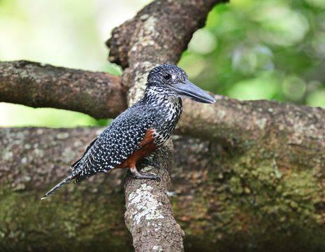 Chobe National Park vogel(12)