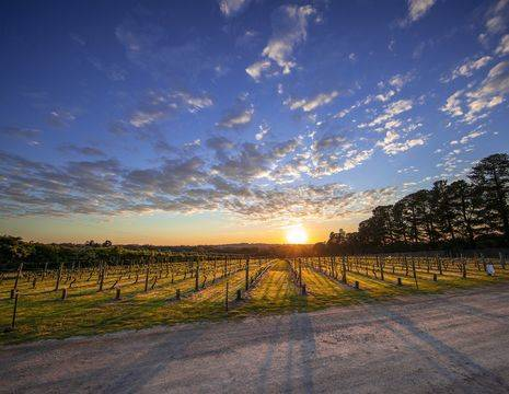 Australie-Mornington Peninsula-wijngaarden